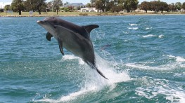 Great places to visit south of perth